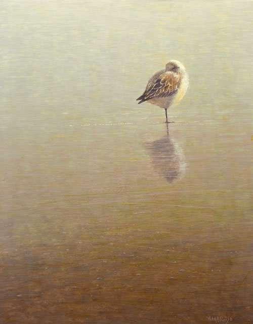 sanderling bird sleeping egg tempera painting by Daniel Ambrose