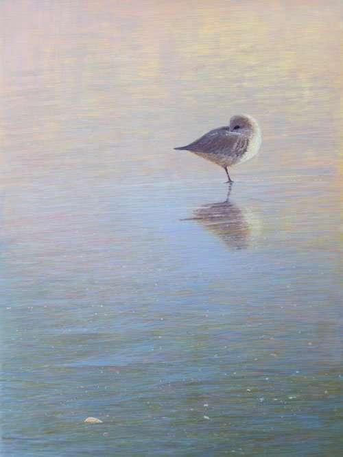 To Sleep, To Dream VI, egg tempera painting of a sleeping bird by artist Daniel Ambrose