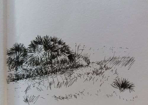 Path to the sea, quick pen and ink sketch of palmettos and sea oats by Daniel Ambrose
