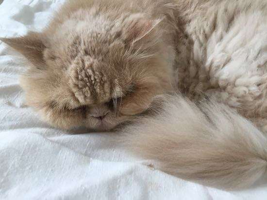 Artist cat curled up sleeping
