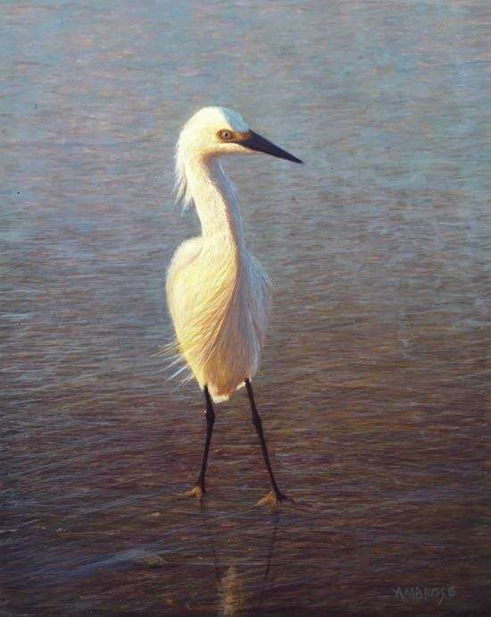 Spring Morning, egg tempera painting of snowy egret by artist Daniel Ambrose
