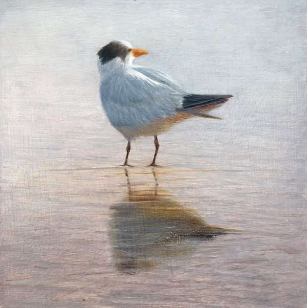 Royal Tern, oil painting by Florida artist Daniel Ambrose