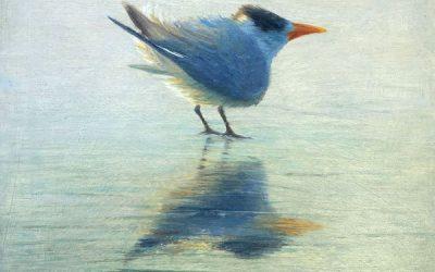 Coastal Bird Series 8 x 8 Paintings