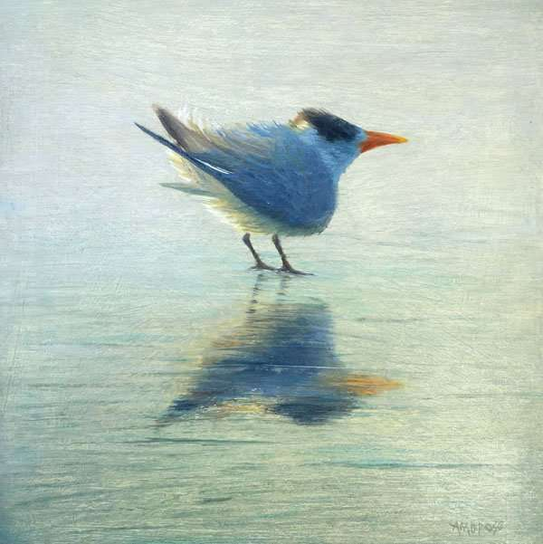 Oil painting of Royal Tern by Daniel Ambrose