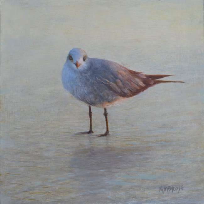 Oil painting of gull by Florida artist Daniel Ambrose