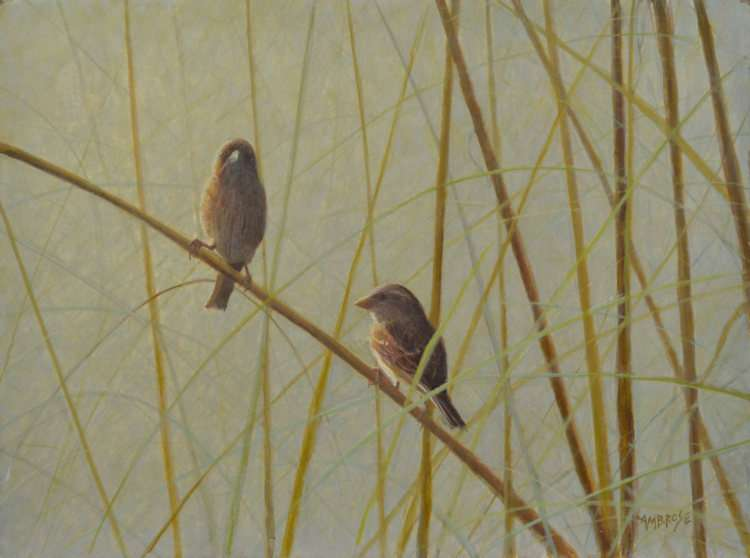 Sparrows-Sea-OatsIVww-Egg Tempera painting by Daniel Ambrose