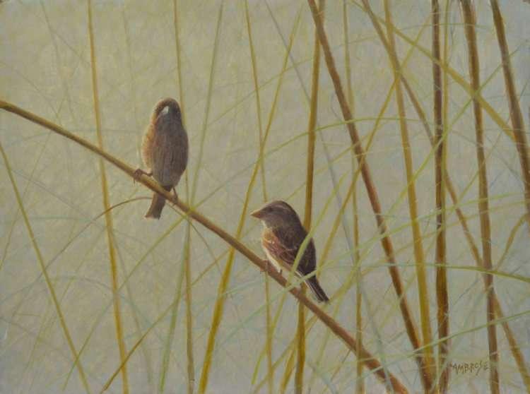 Sparrows-Sea-OatsIVww-Egg Tempera painting by Daniel Ambrose