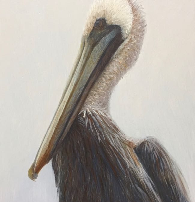 Egg Tempera Painting of a Brown Pelican