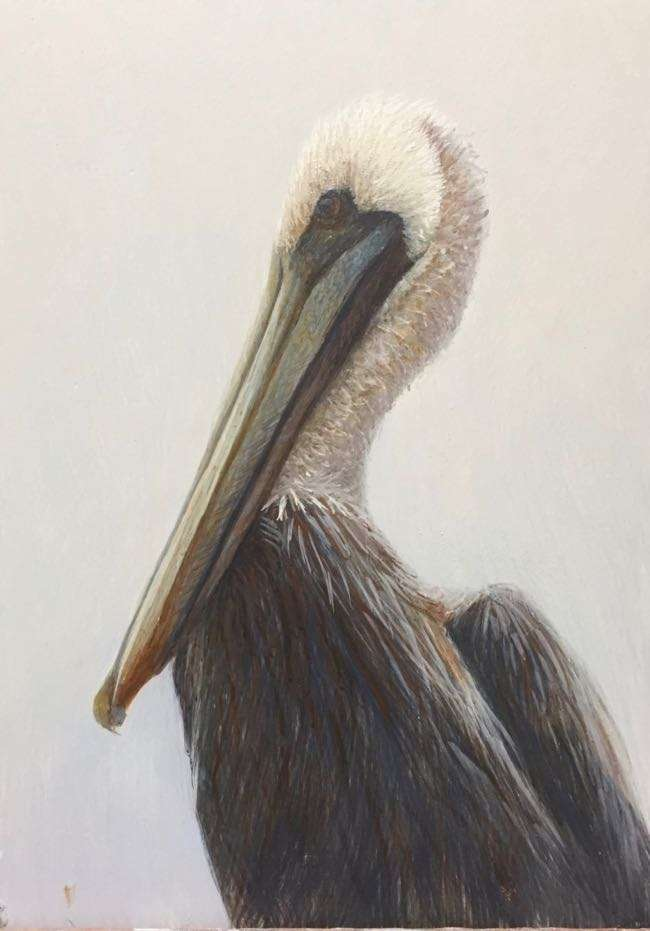 egg tempera painting of a brown pelican by Daniel Ambrose