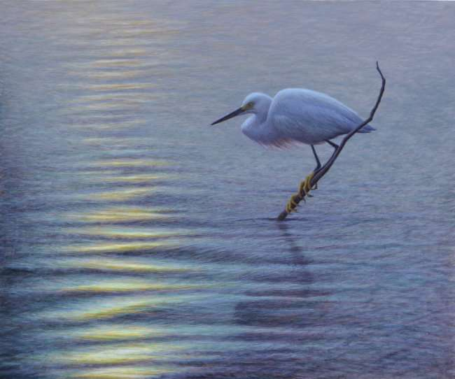 egg tempera painting of snowy egret on a brach in the water