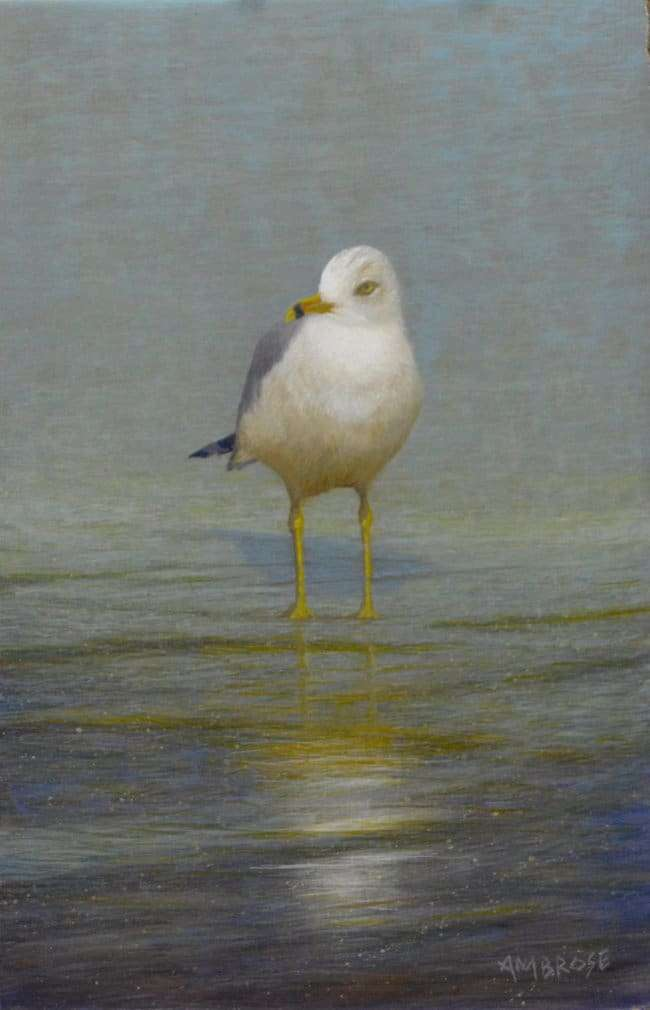 egg tempera painting of gull by Daniel Ambrose