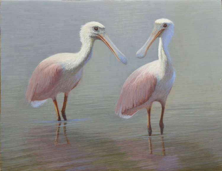 Roseate Spoonbills standing in water. Egg tempera painting by Daniel Ambrose