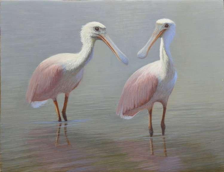 Roseate Spoonbills standing in water. Egg tempera painting by Daniel Ambrose