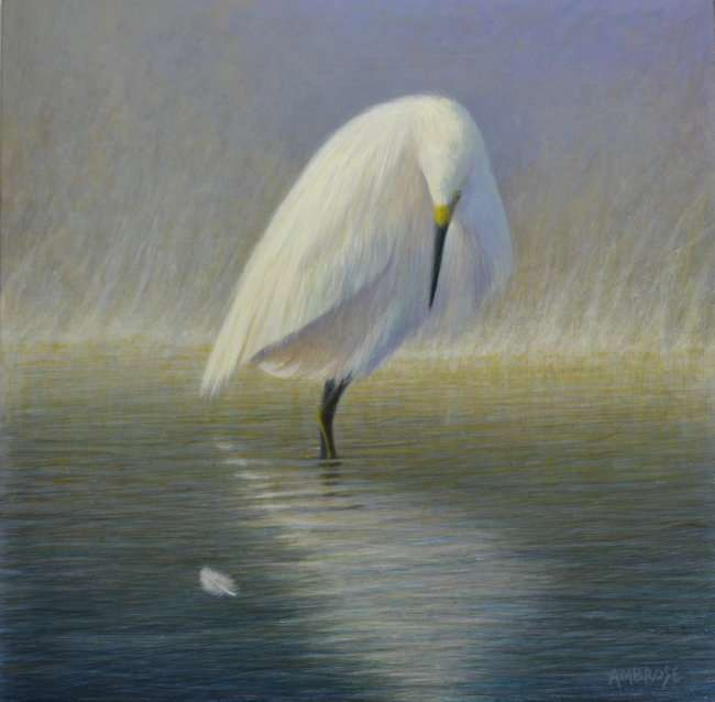 Nearness of Angels, egg tempera painting of snowy egret standing in water near a white feather by artist Daniel Ambrose