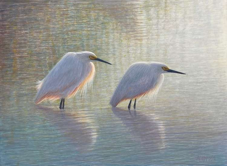 Egg tempera painting of two egrets in water by Daniel Ambrose