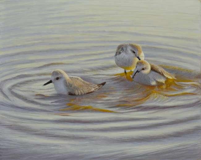 Sanderlings taking a bath. Egg tempera painting by Daniel Ambrose. Cheryl Newby Gallery