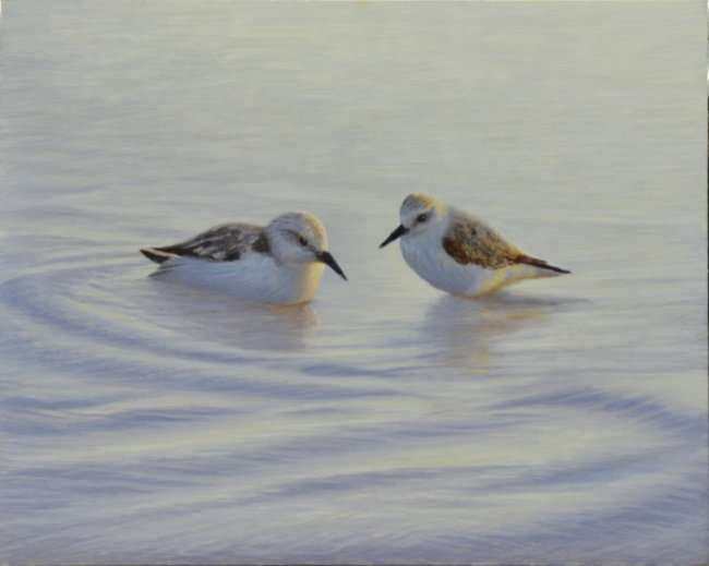 A pair of Sanderlings in water. Egg tempera painting by Daniel Ambrose. Cheryl Newby Gallery