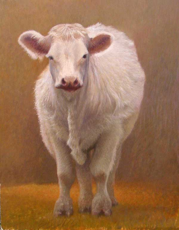 Egg tempera painting of a charolais cow by Daniel Ambrose
